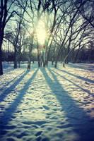 winter by LeaJT