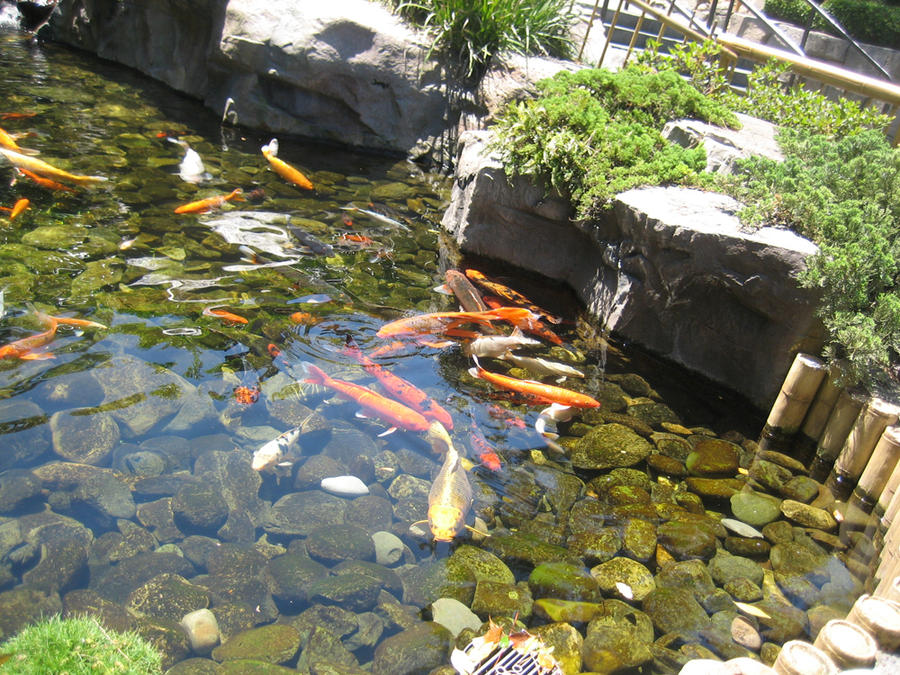 Koi pond by ryumia on deviantart for Pool with koi pond