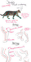Cat anatomy tutorial/guidelines and tips [Legs]