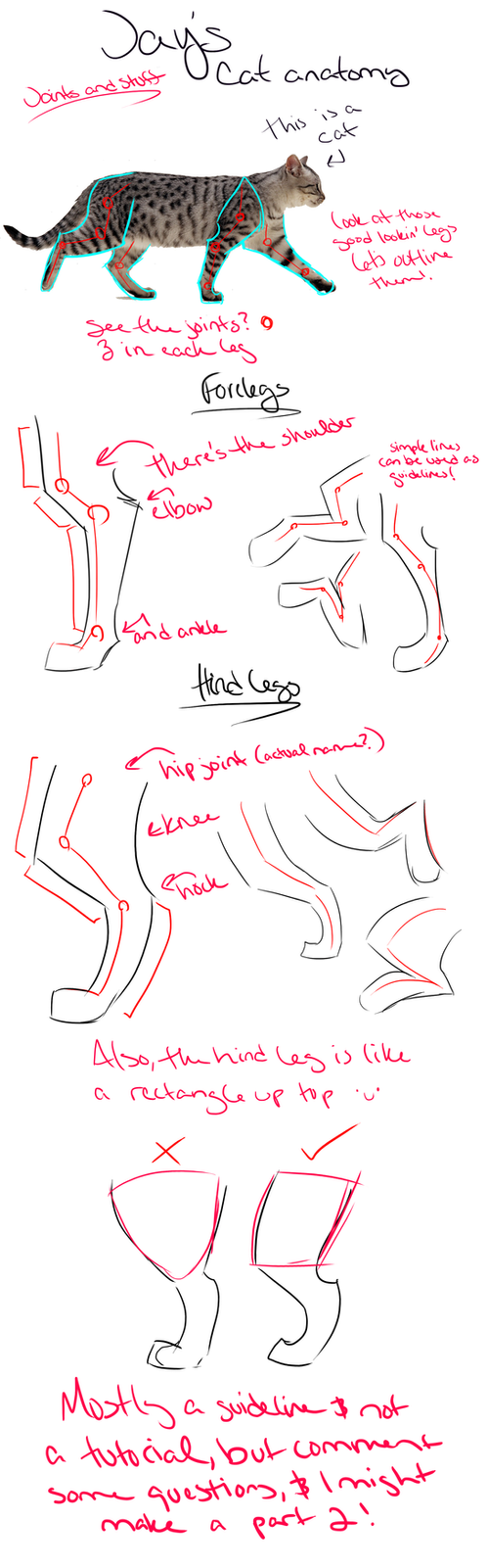 Cat anatomy tutorial/guidelines and tips [Legs] by Jay-Pines on ...
