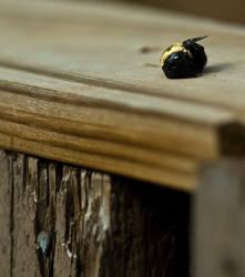 Soggy Bee