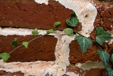 Ivy by Insomnolepsy