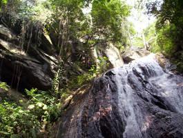 Under the Canopy by konukoii