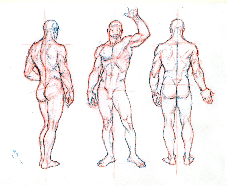 Fein Artist Anatomy Model Zeitgenössisch - Menschliche Anatomie ...
