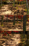 Autumn Forest(Scenery) Dead or Alive 5