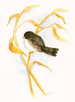 Snowbird by matildarose