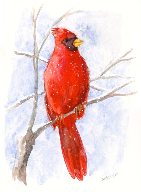 Cardinal by matildarose