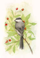 Chickadee by matildarose