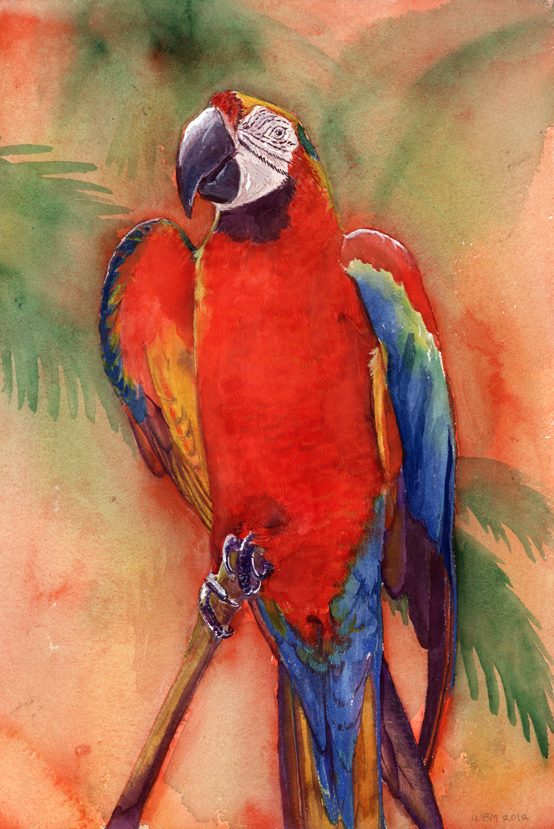 Macaw 1 by matildarose
