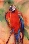 Macaw 1