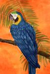 Macaw 2 by matildarose