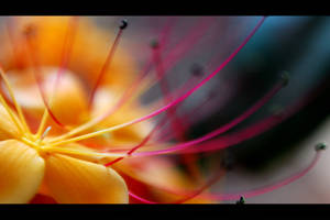 Macro flowers by dennismalayali