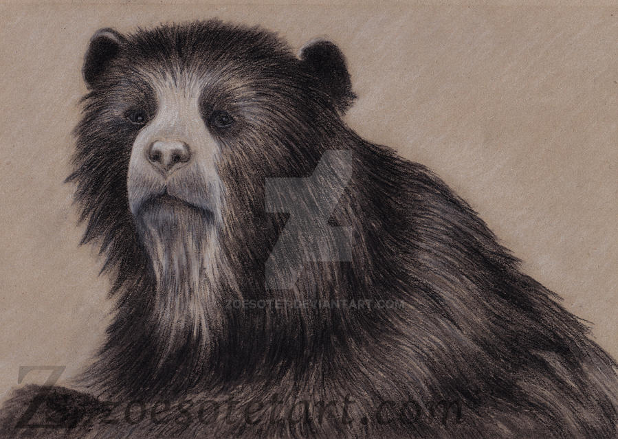 Spectacled Bear 4 by ZoeSotet