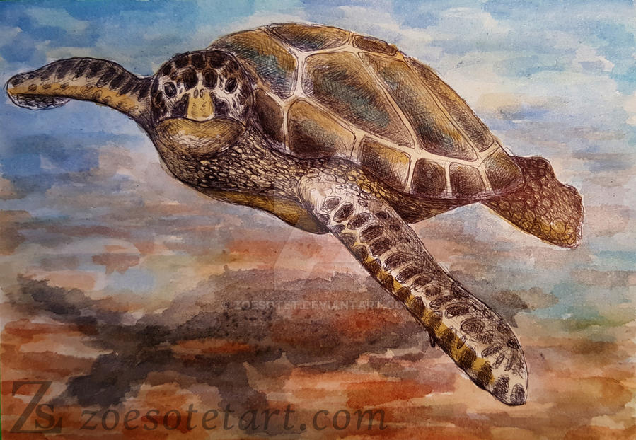 Hawksbill Turtle by ZoeSotet