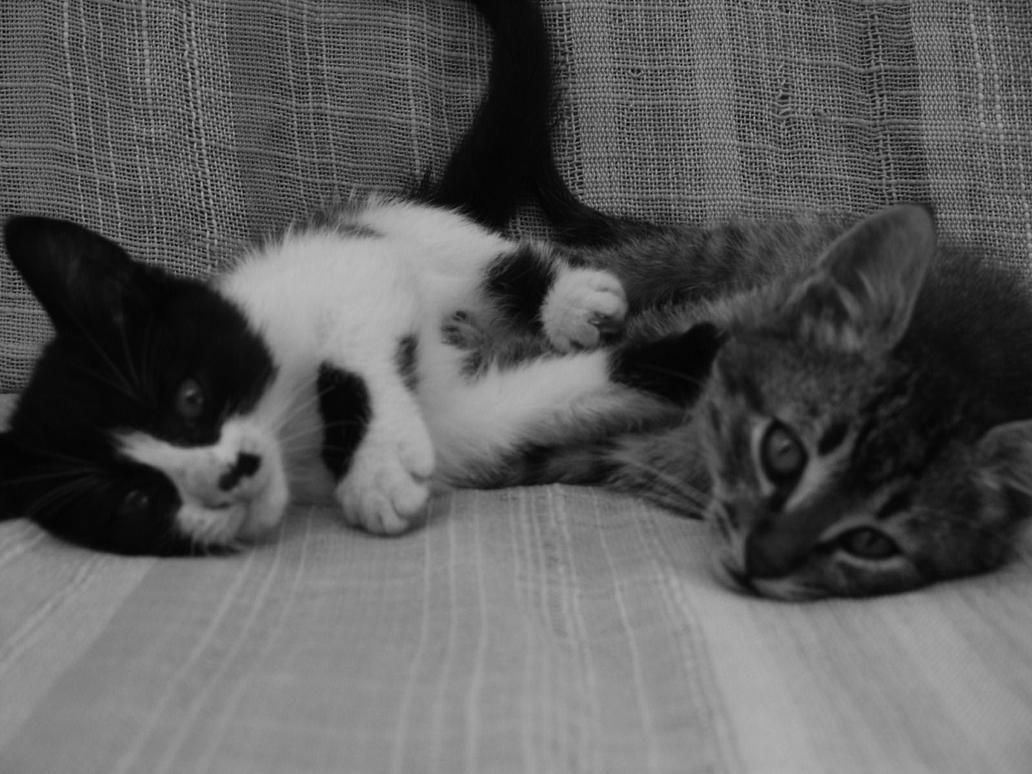 Cats by defenderofMidgard