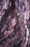Tree bark pattern