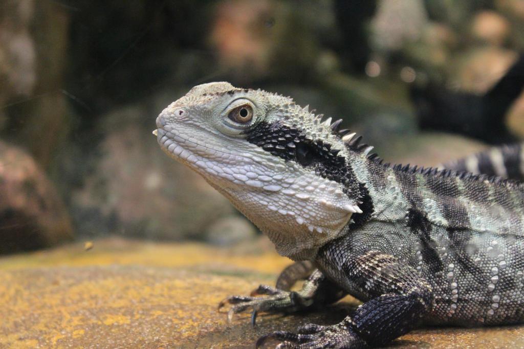 A 2 Z Reptiles Cool Reptiles