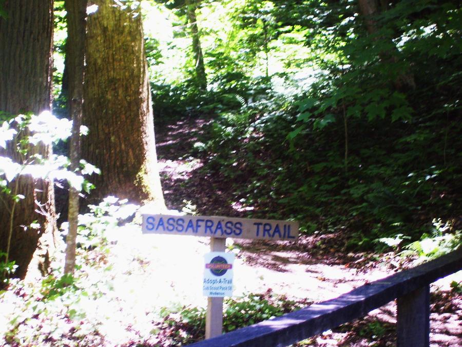 .:Sassafrass Trail:.