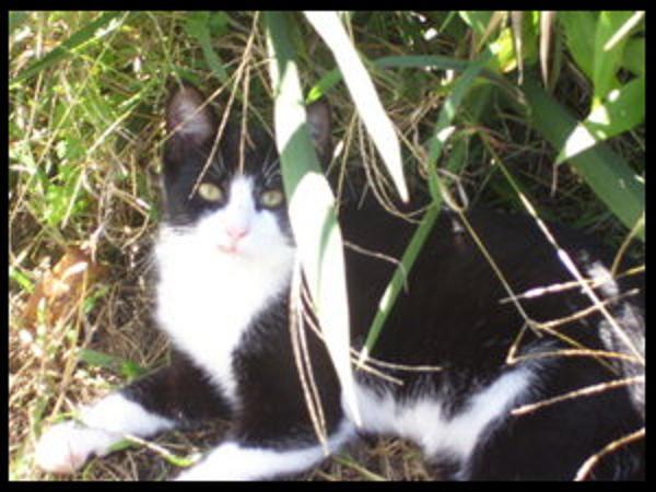 .:Riku the feline:.