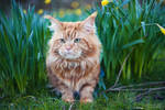 Ginger Spring
