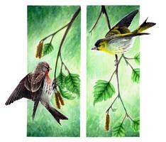 birch birds by Punakylkirastas