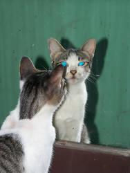 Meow-X2