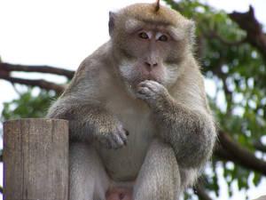 Photogenic Monkey