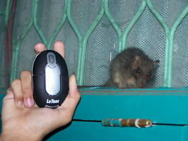 Mouse n' Mouse
