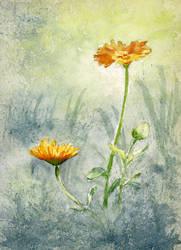 flowers by gzilbalodis