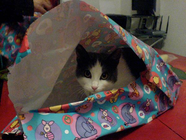 Gift Kitty by midnight-loki
