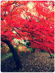 my last autumn by sailed-away