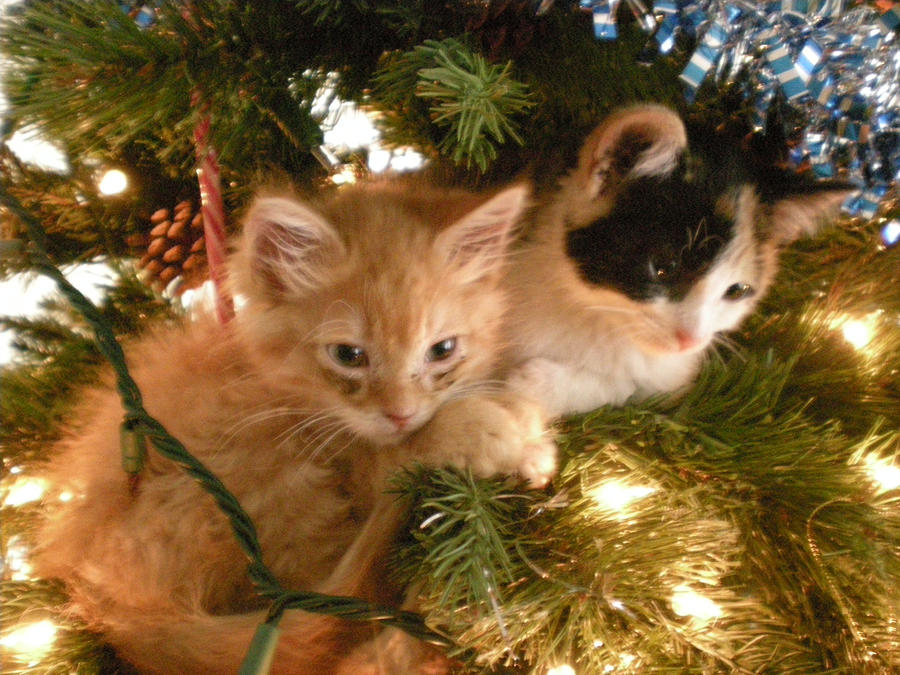 the christmas kittens by moonvalleywolf on deviantart