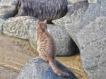 Sat Cat