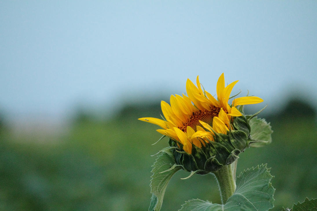 Does Nature S Sunshine Work