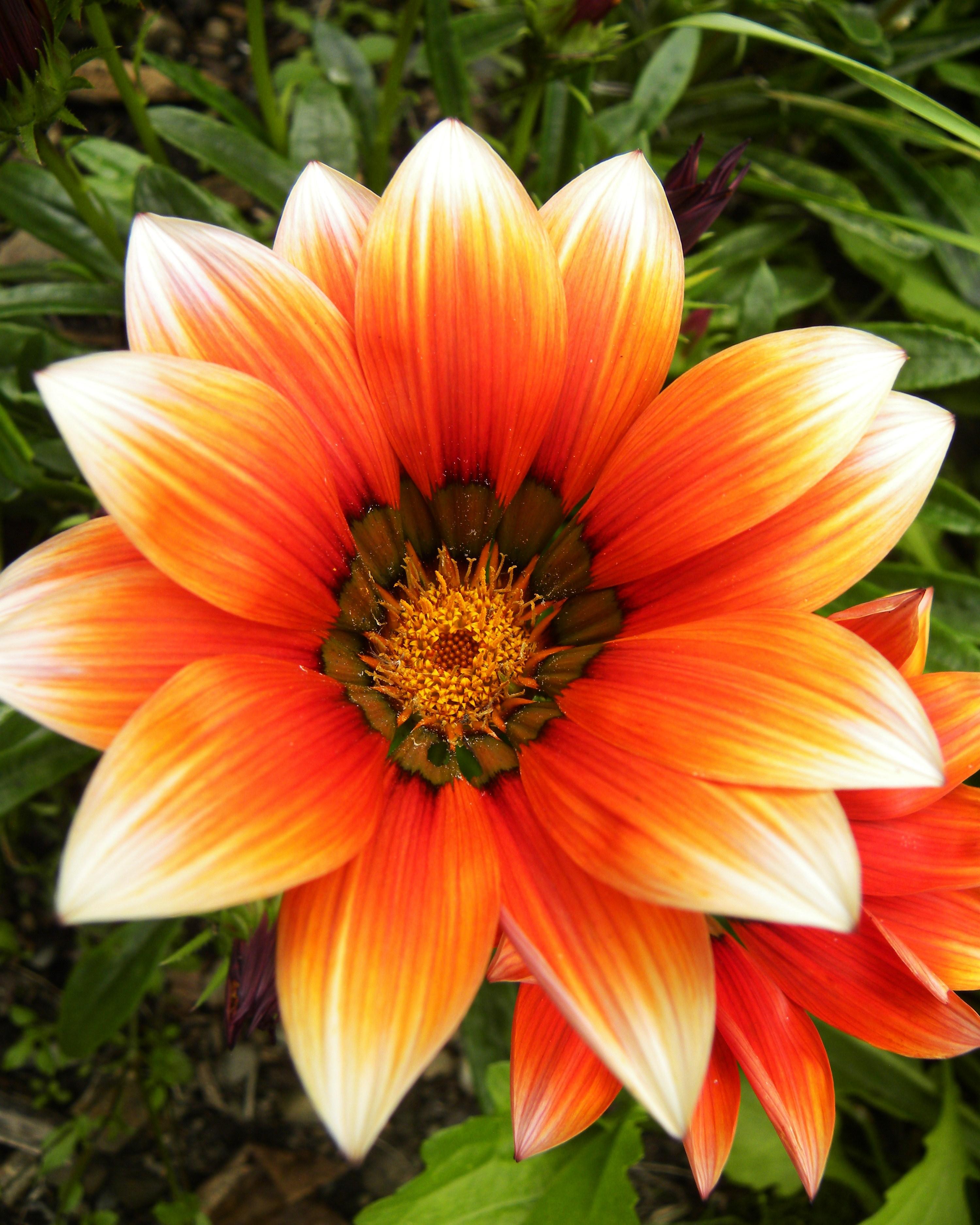 summer flower orange summer flowers. Black Bedroom Furniture Sets. Home Design Ideas