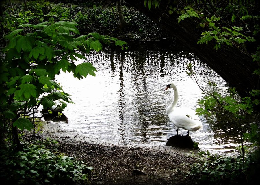 Swan By Basement-ghost On DeviantArt