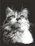 Three-coloured cat