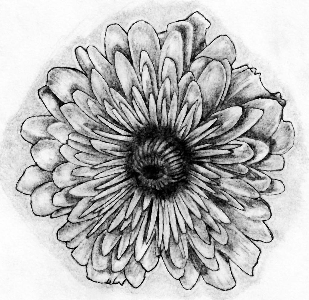 November Flower Tattoo Art by Bobby castaldi art on DeviantArt