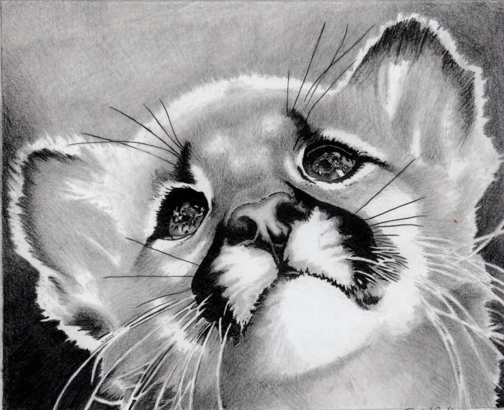 Baby Cougar by Bobby-castaldi-art on DeviantArt