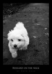 Bernard on the walk