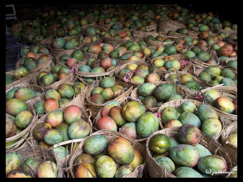 eternal mangoes