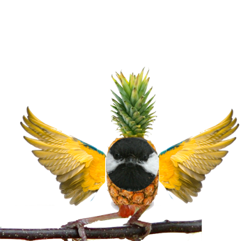 The rare Pineapple bird by Crazy-Proof
