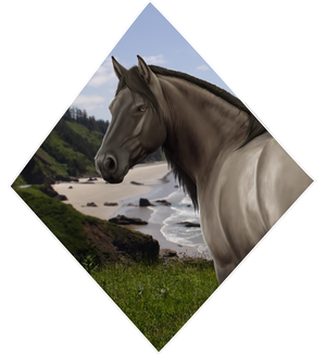 Simple Connemara Pony HP Order