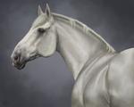 Stoney Digital Portrait by ECLIPSEYMOON