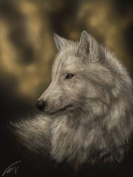 Arctic Wolf Portrait by stalit