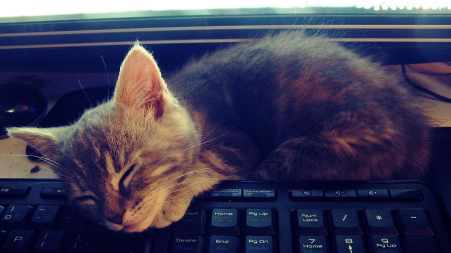 Кот во сне в год кота