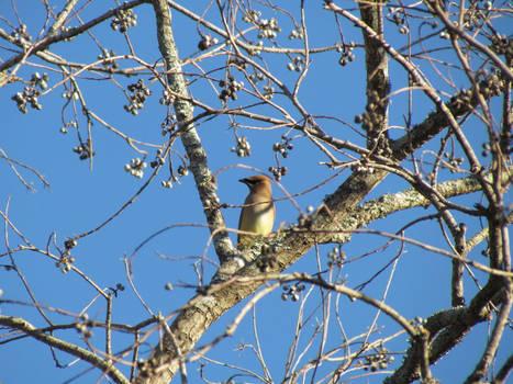 Bird in the bare tree
