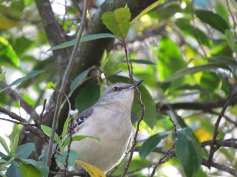 March Bird