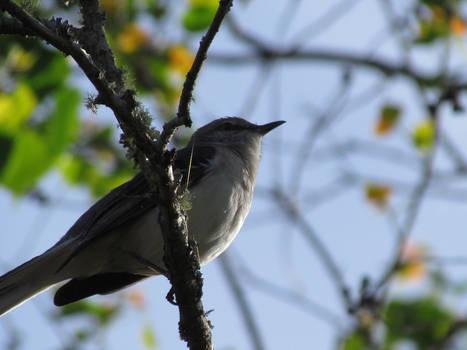 Underbelly of a Bird