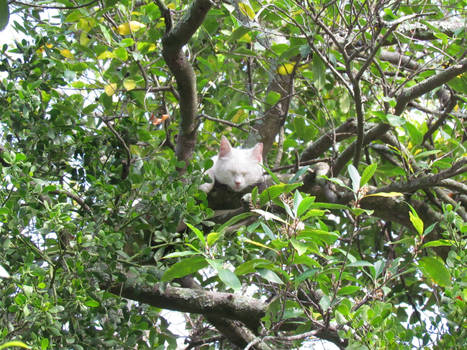 Sleeping in a Tree 2